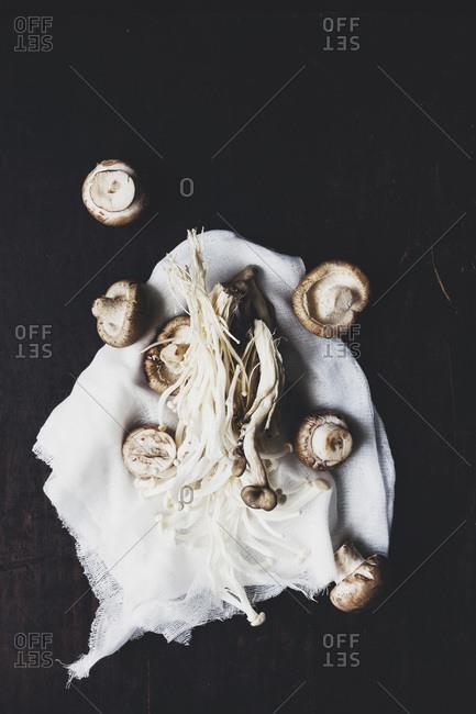 Mixture of mushrooms on a cloth
