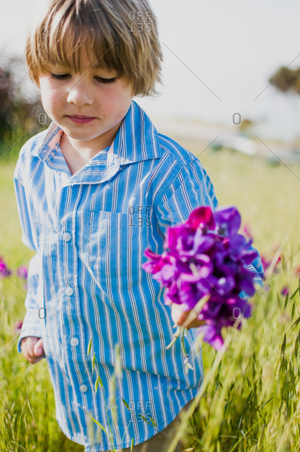 A little boy collects flowers in a field