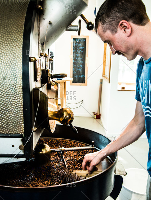 Roaster checking coffee beans