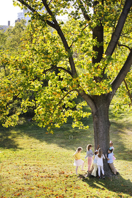 Children hugging a tree in a park