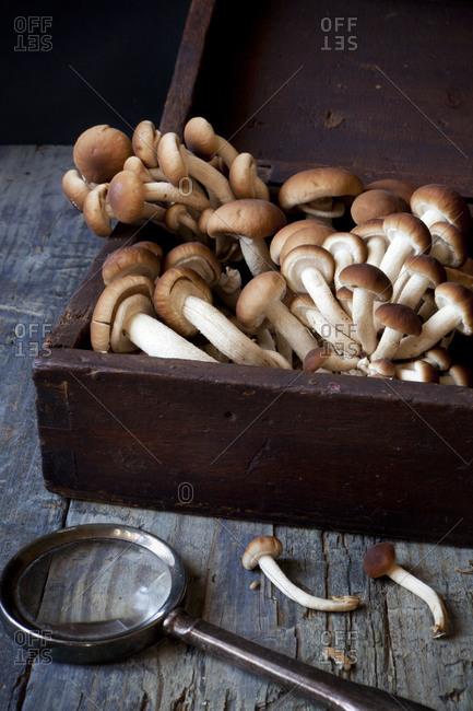 Fresh picked mushrooms in vintage wooden box