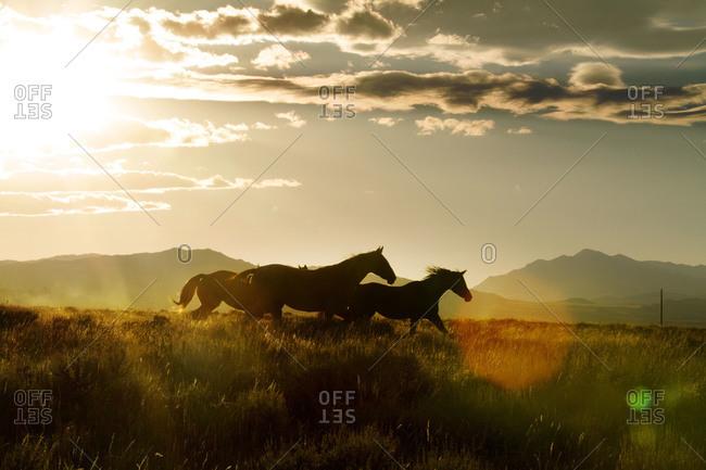 Group of horses running open range