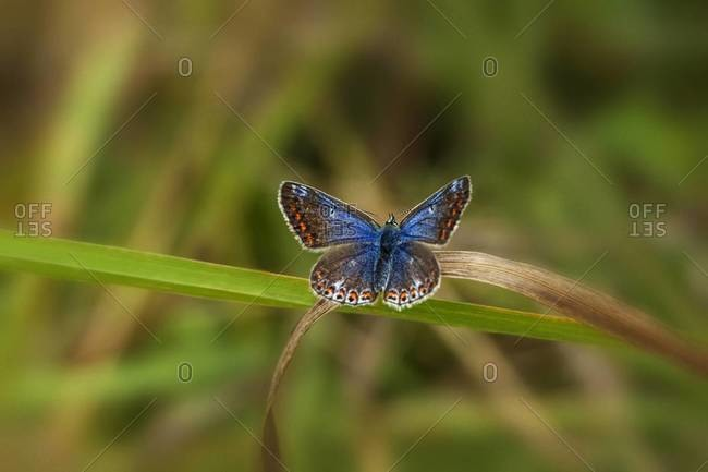 Colorful butterfly on a blade of grass