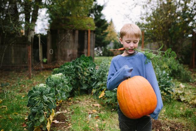 Boy carrying pumpkin in garden