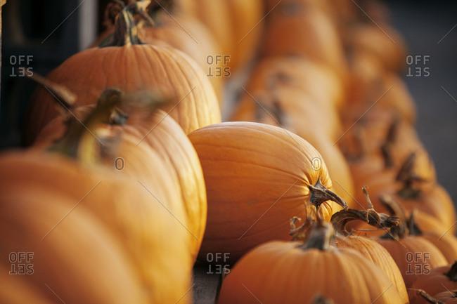 Pumpkins at rural market - Offset