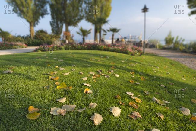 Autumn leaves at lakeside promenade