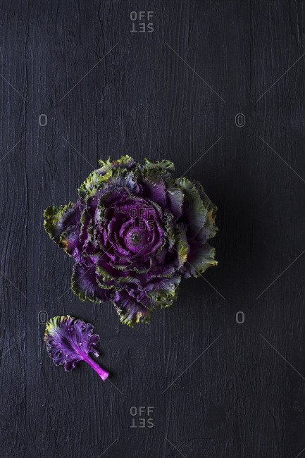Overhead view of a head of purple kale