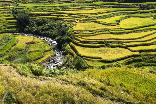 Landscape of Ifugao rice terraces
