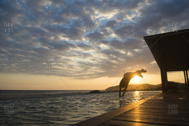 Woman diving to a pool at sunset in a small hotel in the coast of Oaxaca, Mexico