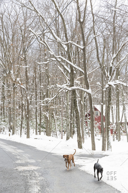 Two dogs on a snowy rural road