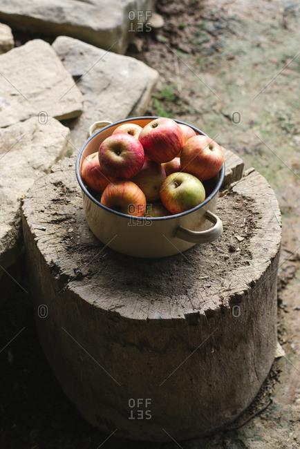 Pot of apples on a tree stump