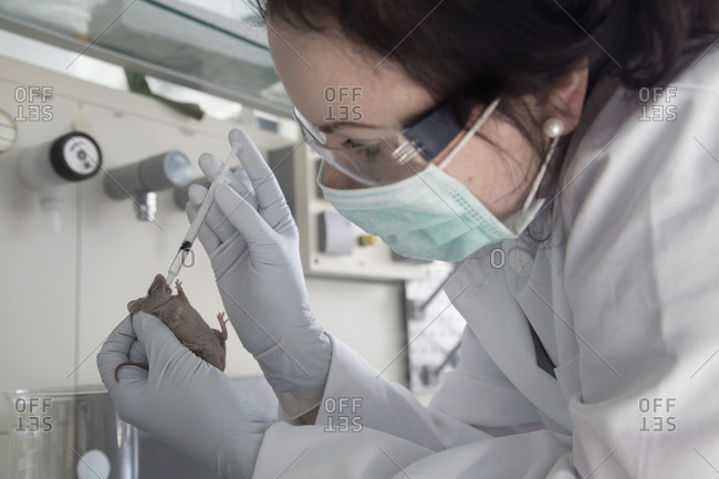 Young female scientist treating laboratory mouse