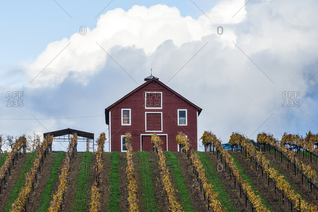 A red barn on a hill with a vineyard