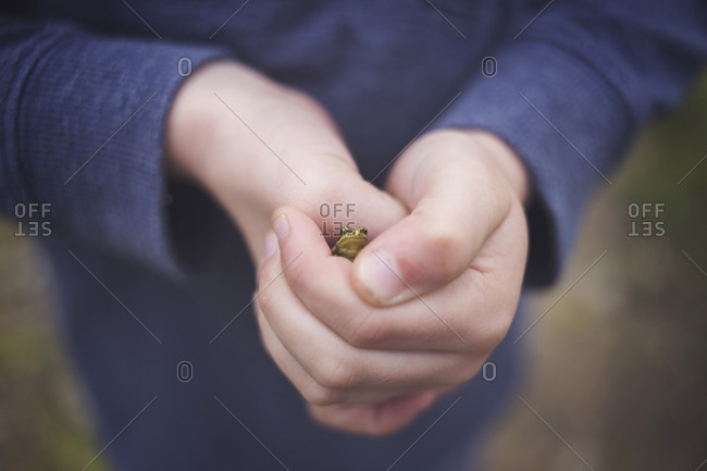 A boy holds a small frog