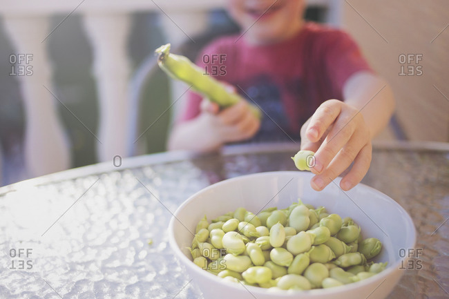 A young boy shells lima beans