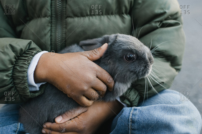 Grey rabbit in boy's lap
