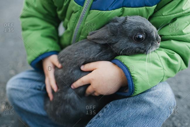 Cute rabbit in boy's lap