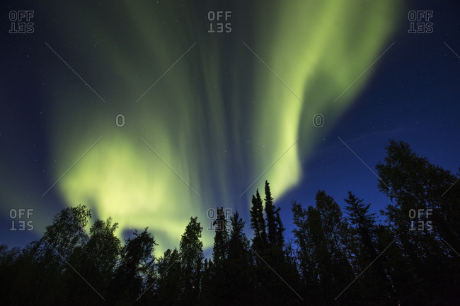Display of the Northern lights above a treeline