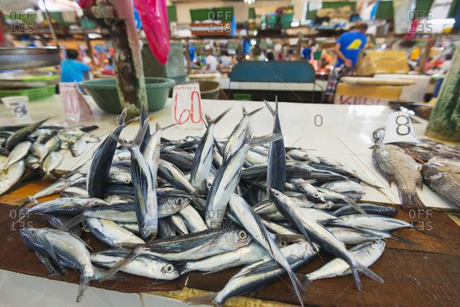 Fish for sale at the public market, Dumaguete, Cebu, The Visayas, Philippines