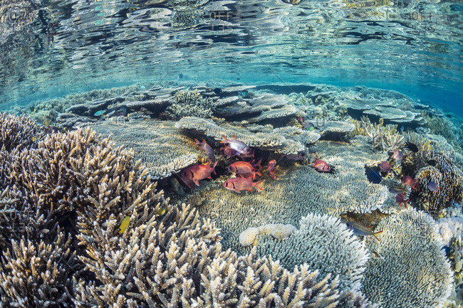 Hard and soft corals and reef fish underwater on Sebayur Island, Komodo Island National Park, Indonesia