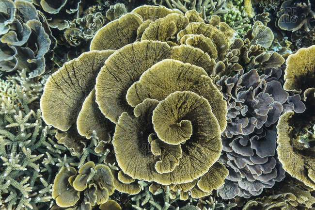 A profusion of hard and soft coral underwater on Siaba Kecil, Komodo Island National Park, Indonesia