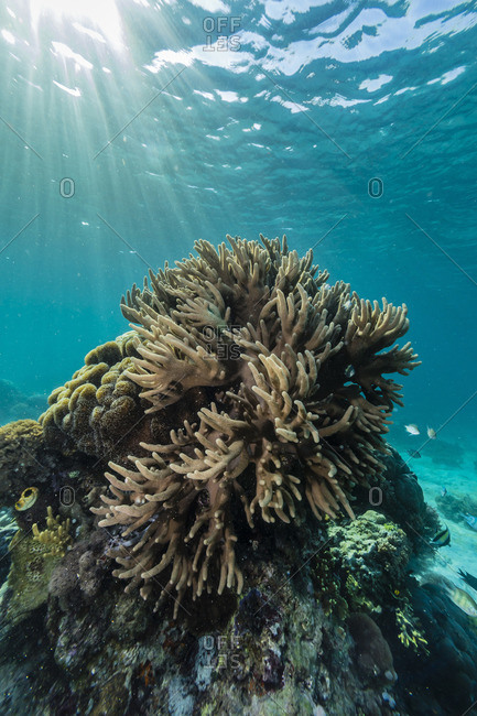 A profusion of hard and soft coral underwater on Tengah Besar Island, Komodo Island National Park, Indonesia