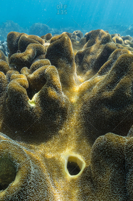 Hard and soft corals on underwater reef on Jaco Island, Timor Sea, East Timor