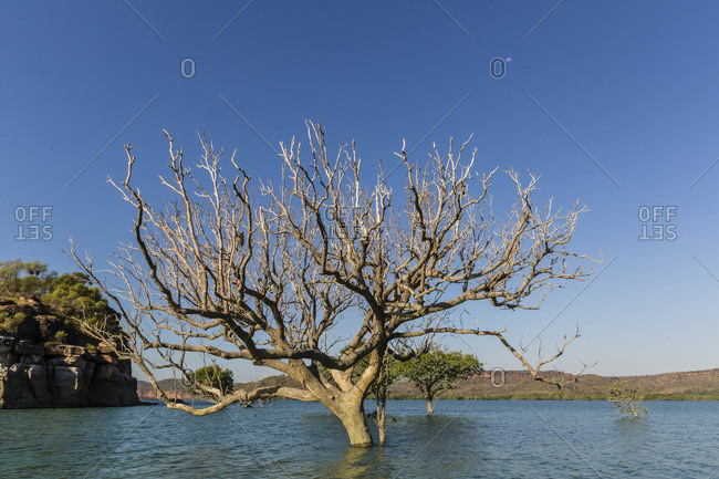 Extreme high tide covers trees in the Hunter River, Kimberley, Western Australia, Australia
