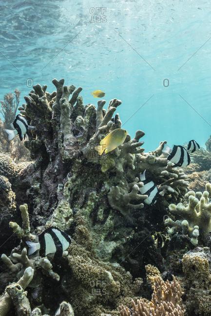 Underwater reef system on pink sand beach, Komodo National Park, Komodo Island, Indonesia