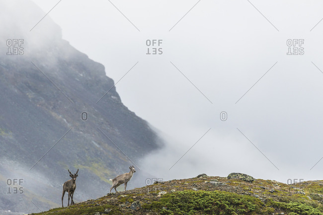 Mountain landscape with deer - Offset