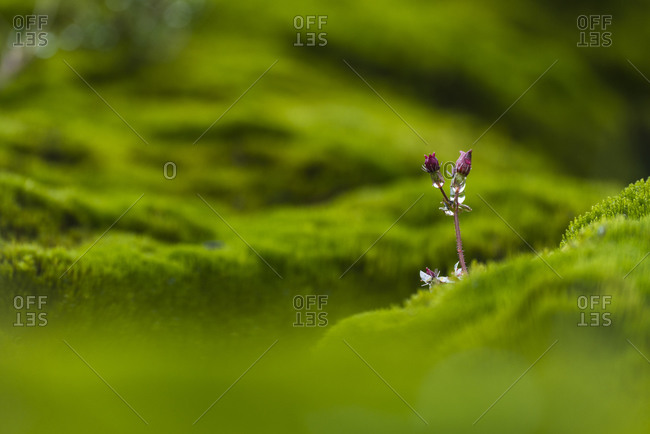 Close-up of flower buds in moss