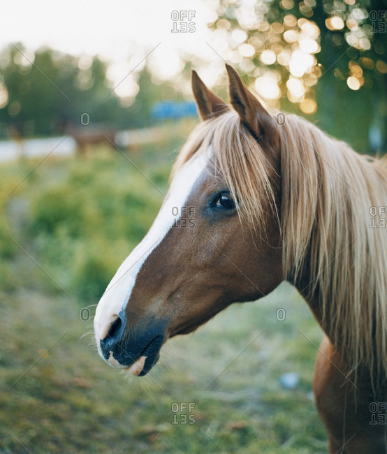 The muzzle of a horse