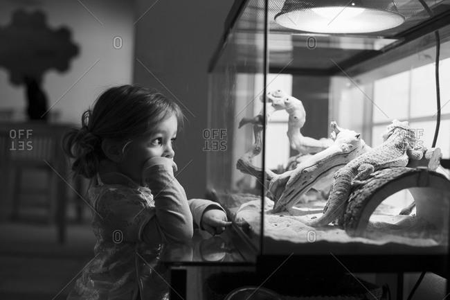 Girl watching iguana in reptarium