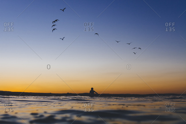 Sea birds fly above a surfer