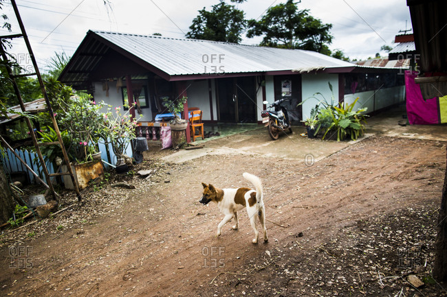 Pet dog walks the streets outside of his home in Sakon Nakhon province, in northern Thailand