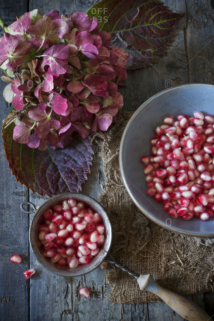 Still life from above of pomegranate seeds and hydrangea