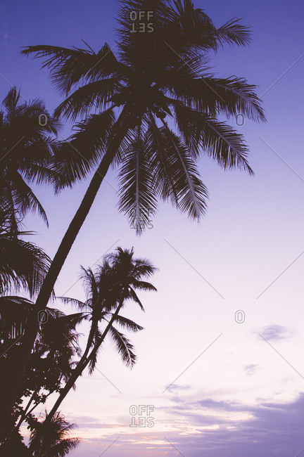 Palm trees at sunrise in Alona Beach, Panglao, Philippines