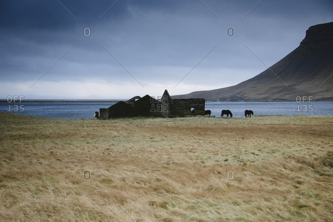 Horses grazing at a lake in Iceland