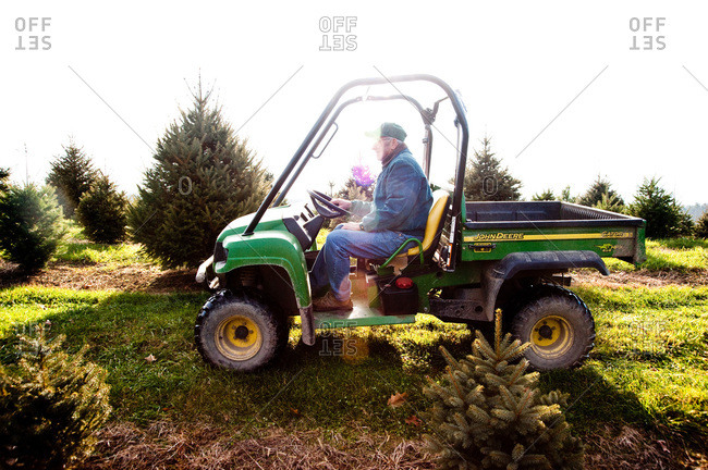 Accord, NY, USA - November 21, 2012: Man driving a truck on a tree plantation in Accord, NY, USA