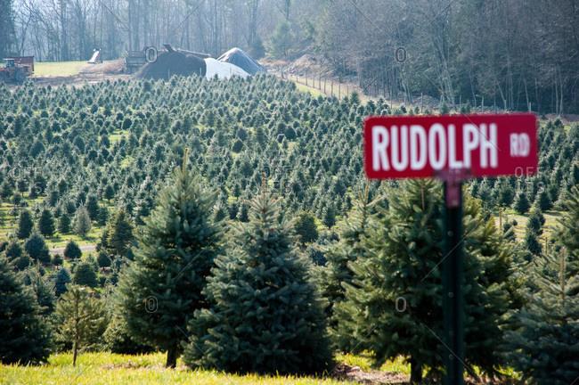 Accord, NY, USA - November 21, 2012: Firs on a tree plantation in Accord, NY, USA