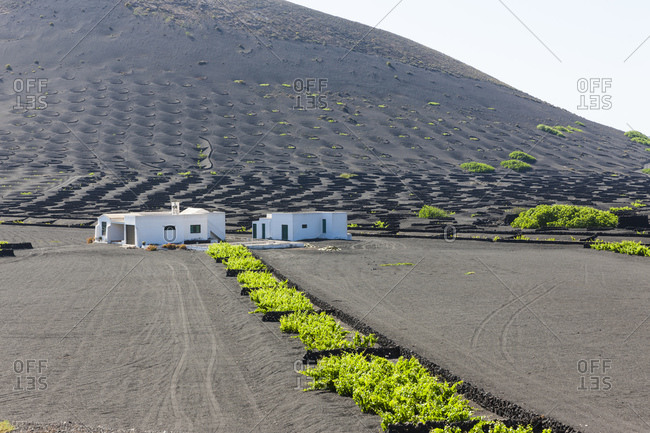 Viticulture at Volcanic landscape, La Geria, Canary Islands