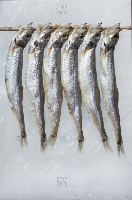 Anchovies drying on a skewer