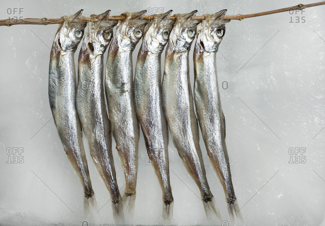 Six anchovies on a skewer