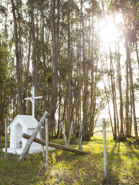 Sanctuary in an Uruguayan forest