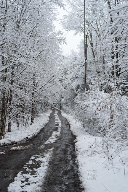Road through the snow-covered woods