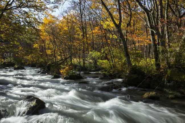 Oirase river in Aomori, Japan