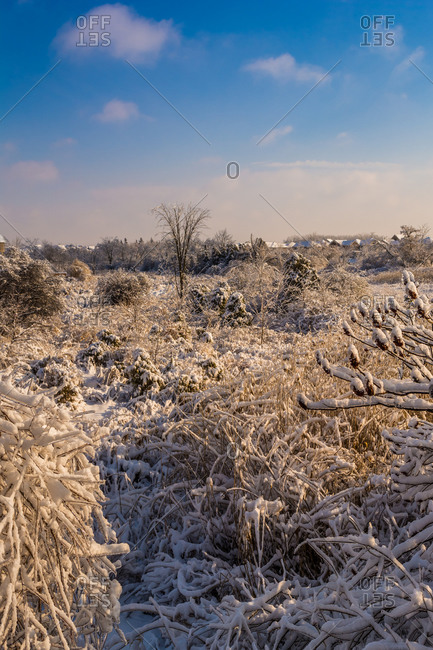 A field of grasses and shrubs covered in snow and ice
