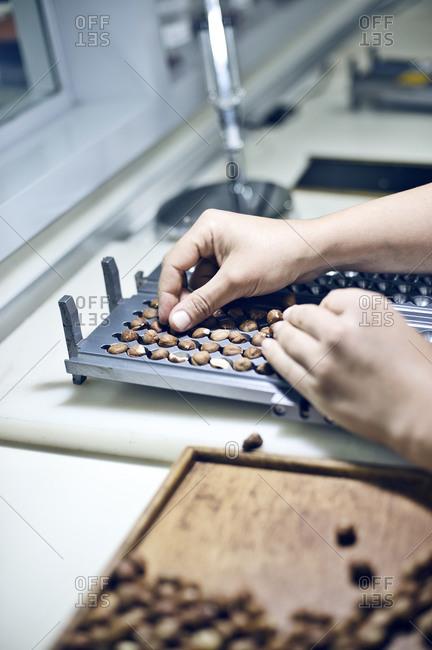Hazelnuts in tray in factory