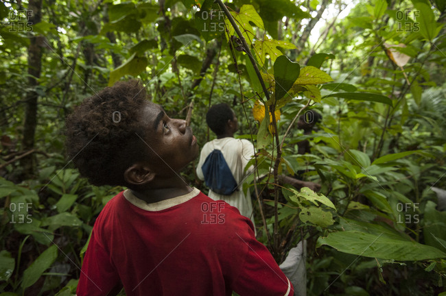 Luzon Island, Philippines - July 20, 2012: Agta hunters in a forest looking for food