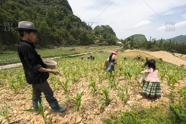 Bac Ha, Lo Cai, Vietnam - May 12, 2012: H'mong people working in a corn field